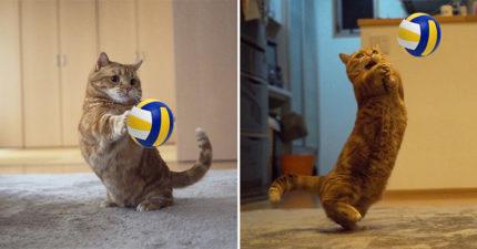 超可愛短腿貓打排球!用粉紅肉掌「兇猛扣球」網友萌爆:好想接❤️️
