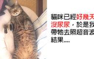 貓皇「好幾天沒尿尿」他趕緊帶照超音波 獸醫揭開「糟糕真相」讓奴才瞬間崩潰!