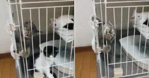 影/貓咪挑戰「從籠子逃脫」影片爆紅 網傻眼:直接流出來...