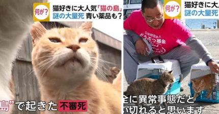 日本貓島大危機!貓咪數量爆減100隻「只剩3分一」 志工調查後發現超噁心真相