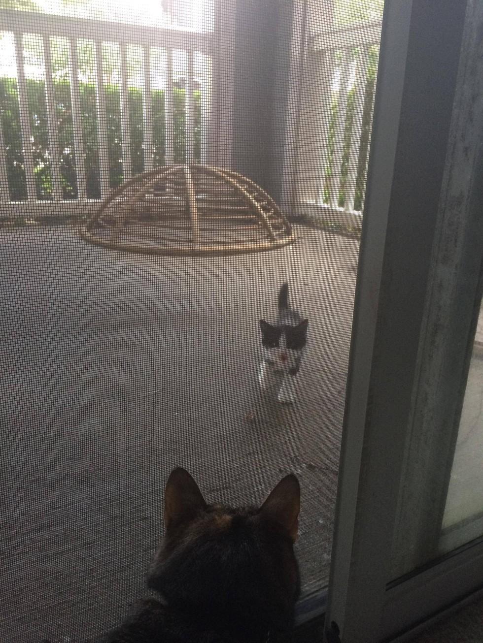 厚臉皮貓「守門口大叫」求收編!幾週後家中老貓就走了...主人驚:祂安排好接班人了