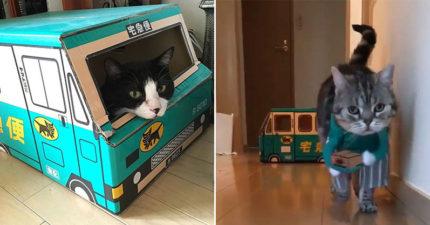 貓皇轉職當「最萌宅配員」爆紅 煞氣開「黑貓車」奴才被電暈:自己賺罐罐❤️️