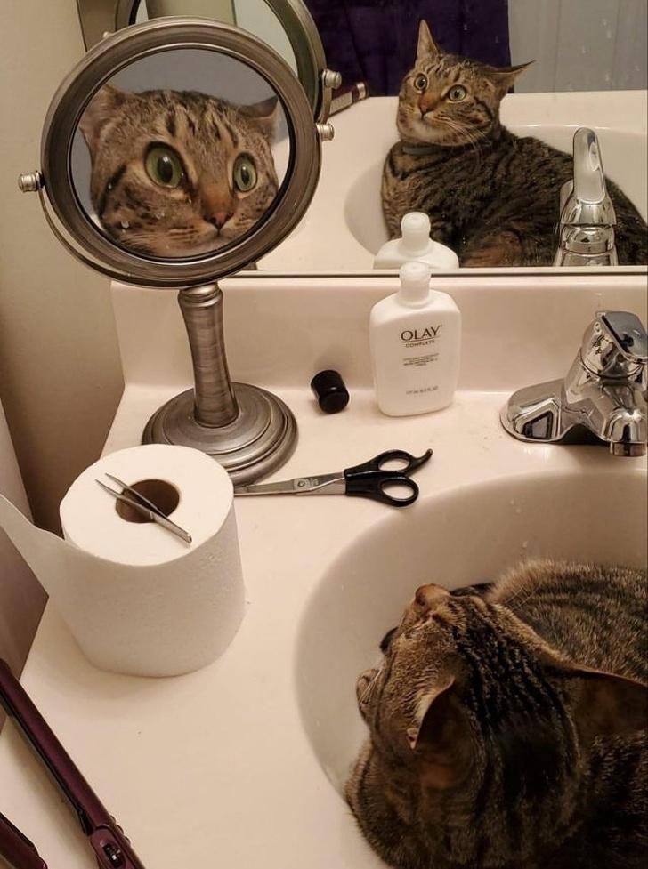 23張「只有貓咪會這樣」的獵奇舉動 千萬不能買禮物給貓皇!