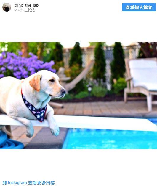 影/呆萌狗因泳池太淺被迫上演「只有一半的狗爬式」 網看「下半身動作」立馬笑翻:只剩無奈!