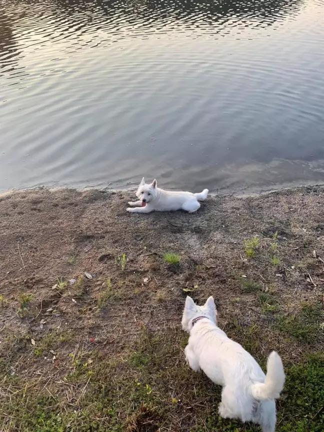 3隻狗狗池塘開心「玩到變泥球」 15分鐘後卻「再也沒有起來」...主人得知真相痛斥:沒有標誌