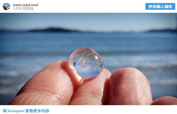18種「天生就學會隱身術」的驚奇生物 玻璃章魚的「透明外表」美得像畫!