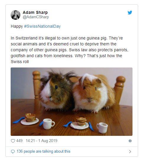 超貼心法律!如果只養「1隻天竺鼠」就違法 瑞士政府:因為牠們會寂寞
