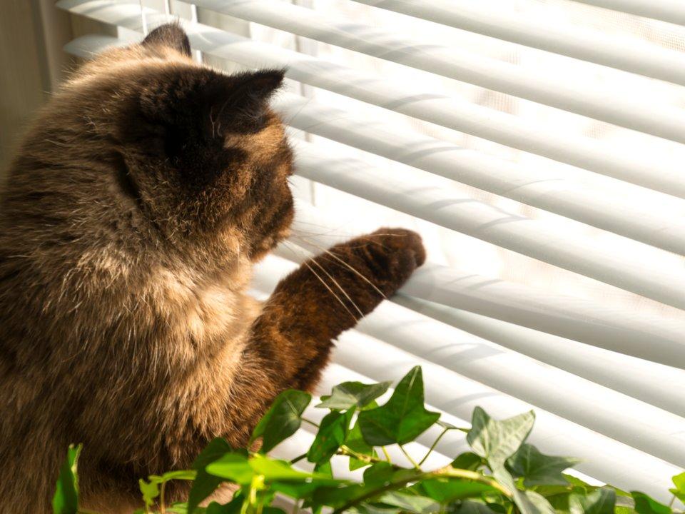 專家分析6件「貓咪做的怪事」背後真正意義 「抓蟑螂送你」是在嫌你笨!