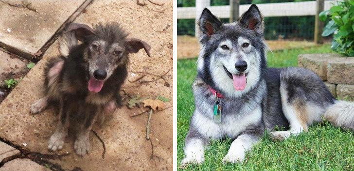 18張告訴你「毛孩為什麼愛人類」的暖心照 狗狗「被領養後」的笑容超感人!