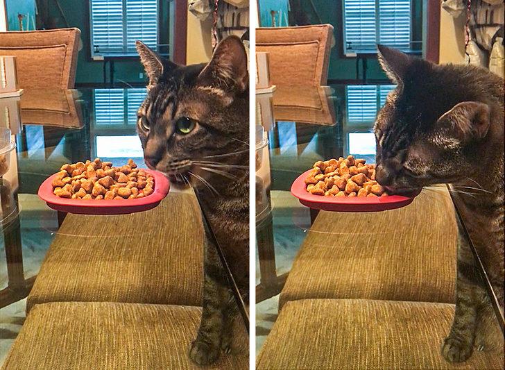 18個只有「貓咪才做的到」的驚奇日常 牠把輪胎變成「平民跑步機」!