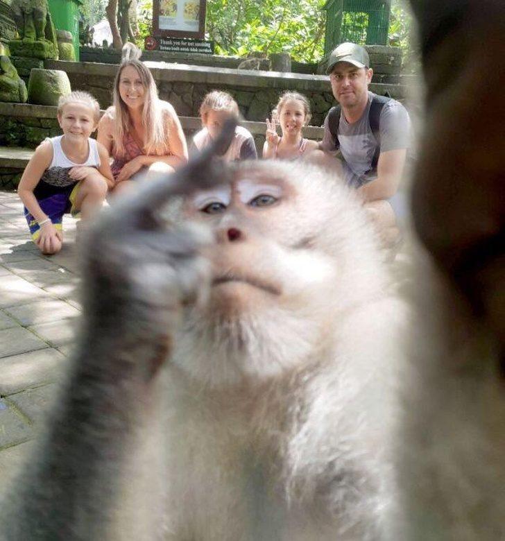 18位「想拍出網紅照卻失敗收場」的超衰人類 屁猴「亂入全家福」還比中指搶鏡!