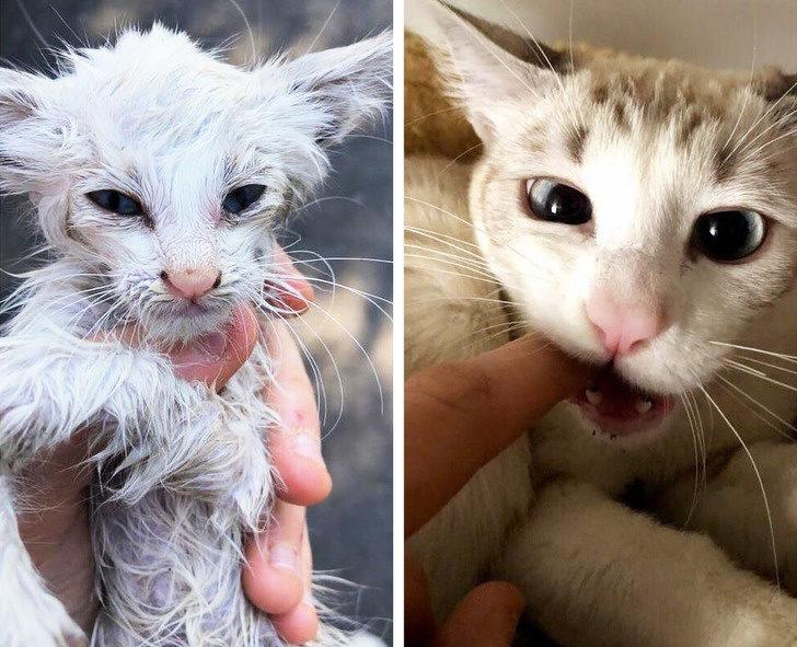 20個領養毛孩的暖心故事 可憐狗「被人愛一年」落差讓人爆淚!