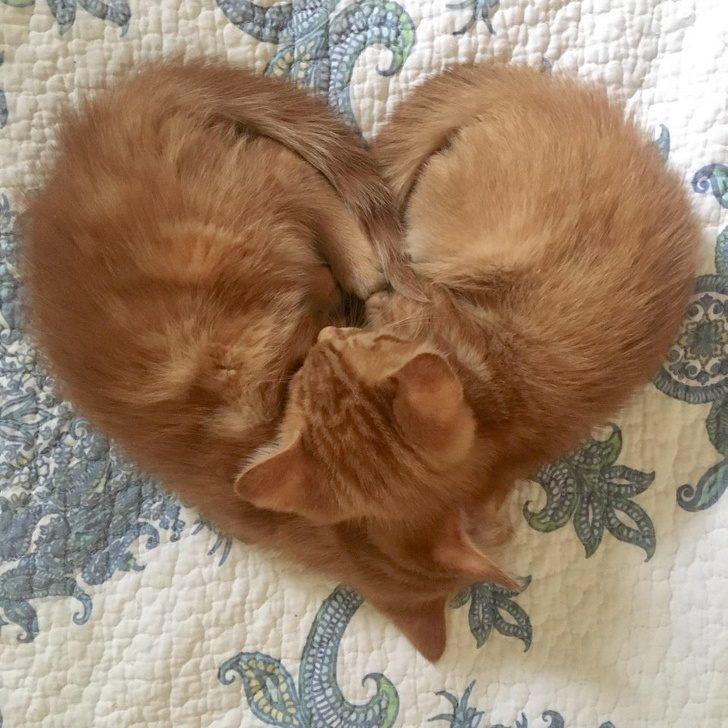 18張讓人願意「單身一輩子」的寵物放閃照 每天「把你抱醒」超浪漫