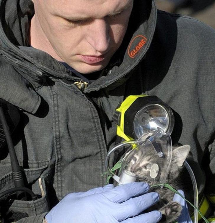 20個「該被世人表揚」的無名英雄 消防員「衝進火場」抱出小貓