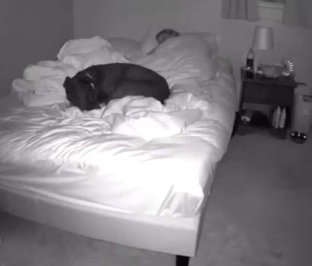 影/狗狗一起睡總是「不斷醒來」 怒設攝影機發現「心碎真相」!