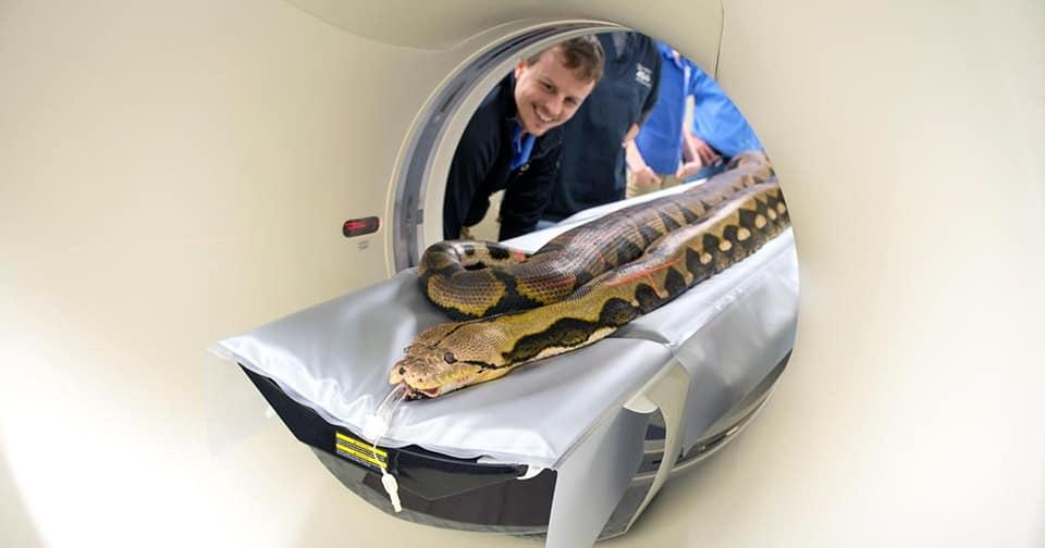 13種動物「做斷層掃描」的可愛幕後 長頸鹿的腦袋「超像雜草」