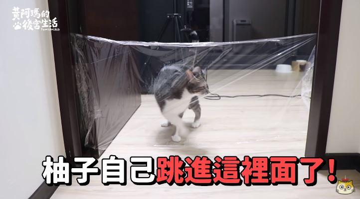 影/貓看得見保鮮膜牆嗎?網紅實測揭露「超驚人真相」:有問題的不是視力是智商…