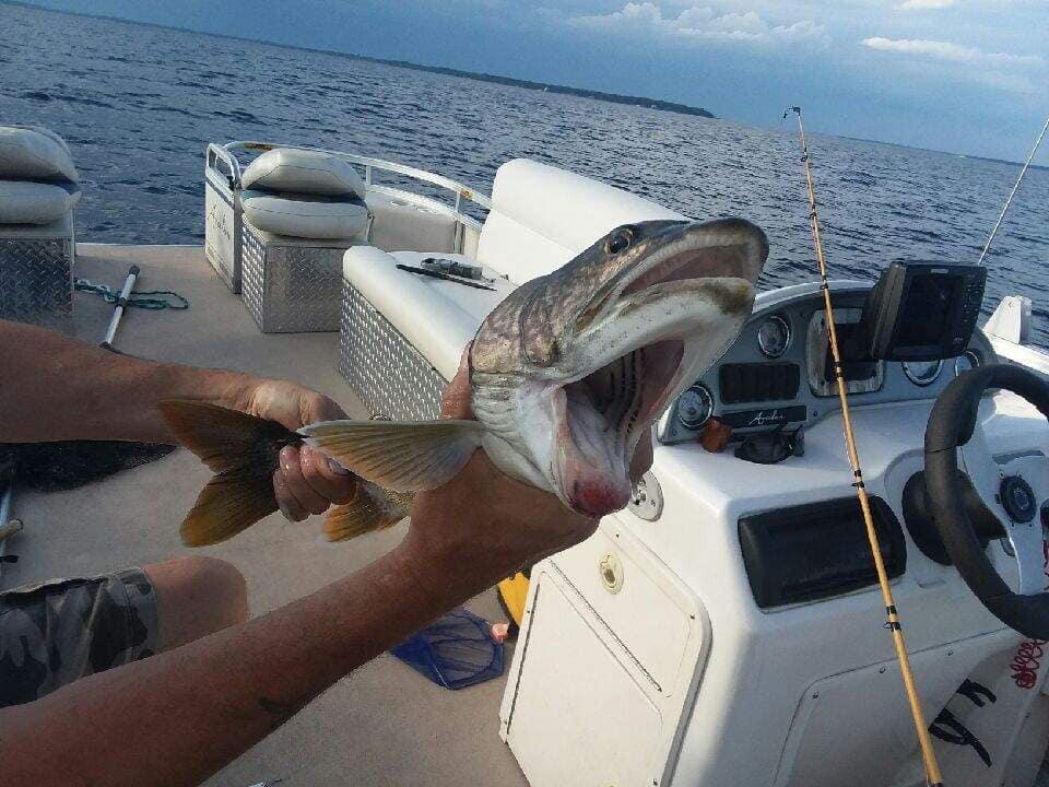 她釣到「2張嘴巴的魚」被嚇壞 畫面「詭異到看不下去」卻意外揭人類的最大錯誤!