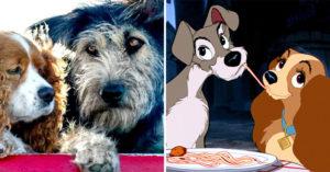 迪士尼真人版《小姐與流氓》將上映 劇組公布超感人「選角故事」流氓住在收容所!