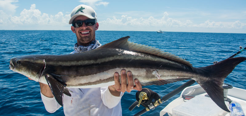 影/無人機空拍「大鯊魚緊追小鯊群」驚險瞬間 海洋上演「玩命關頭」網嘆:以後很難看到!