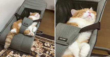 自家貓咪超愛在「嬰兒車」睡覺 往下一看「超標準姿勢」被萌翻❤