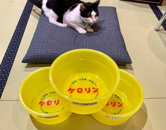 大阪人氣泡湯店開幕!主打「泡貓湯」讓你邊泡邊擼 貓奴全瘋:絕對吸爆!