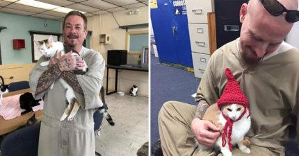 收容所把貓咪送進監獄「刺青大哥搶當貓奴」 排隊織毛衣給主子穿...超違和!
