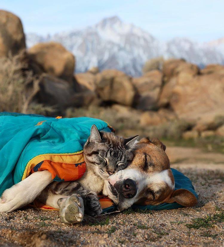 「女友派跩貓+男友力忠狗」環遊世界 牠自願「變身坐騎」畫面超有愛!