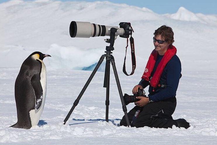 攝影師拍企鵝「牠們零戒心給拍」還自己走到相機前 網友卻警告:會出事!