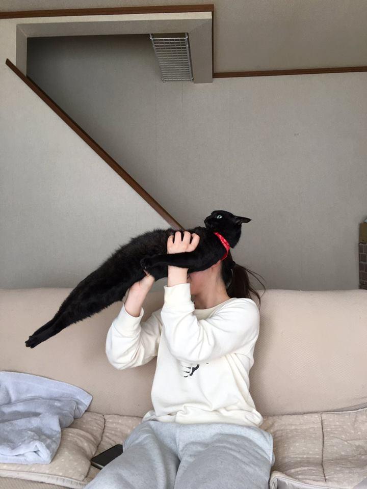 本喵絕不屈服!地表最硬頸「鋼鐵直貓」 眼神超堅毅:就是不給抱