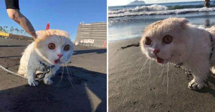 超萌貓第一次去沙灘…牠看到「目瞪口呆」心情無法平復 向主人「怒吼瞬間」網笑翻!