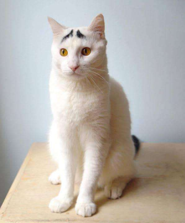 11隻因為「長相太特別」害牠們威嚴盡失的超可愛貓咪