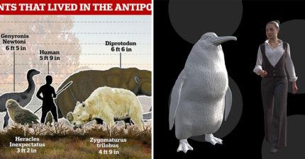 考古學家挖出「巨型企鵝」化石 「超不科學身高」比一般女生還高...體重更狂!