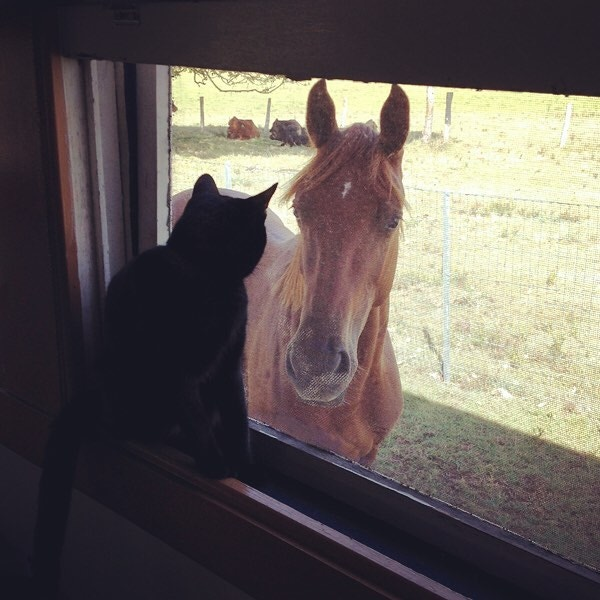 跨越物種的愛情!駿馬對小黑貓「一見鍾情」相伴6年 主人:每天都曬恩愛…受不了