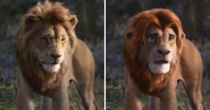 影/他用「專業換臉程式」做出改良版《獅子王》電影 粉絲驚呆:比迪士尼好看100倍!