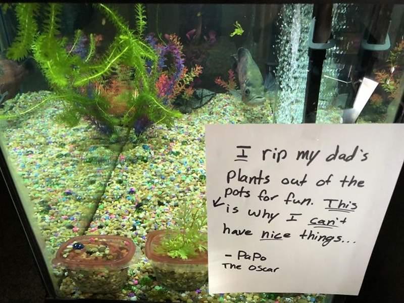 寵物魚「太壞了」被主人公審 連「自己的後代都吃」注定孤獨終老!