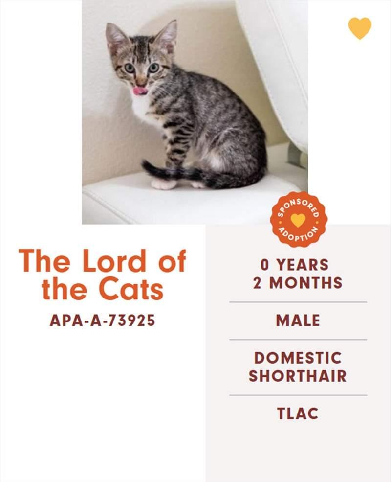 收容所「幫貓咪亂取名」網友全搶著養 iPad4本人超可愛!