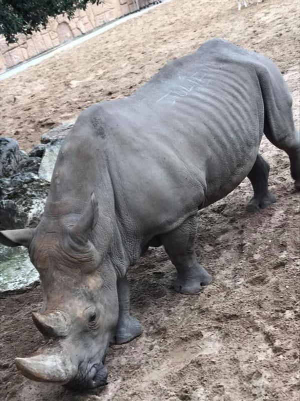 惡劣遊客「用指甲硬摳」犀牛皮膚 刻下「自己的名字」當紀念…園方暴怒:你們超愚蠢!