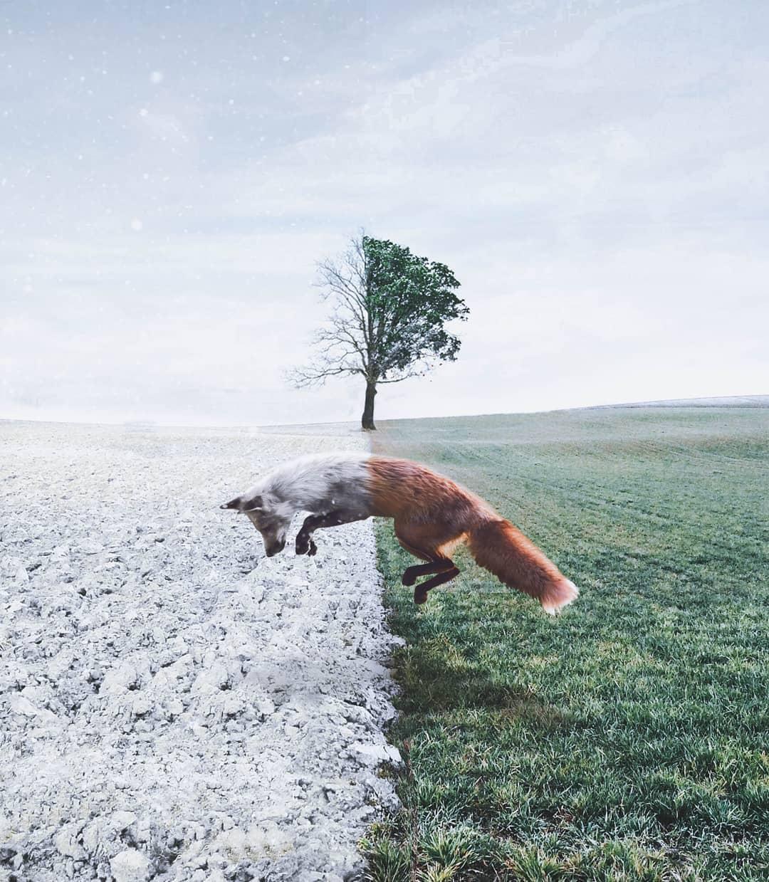 15張藝術家幫動物「創造魔法能力」的合成美照 小萌鴨「結合香蕉」畫面太衝擊!