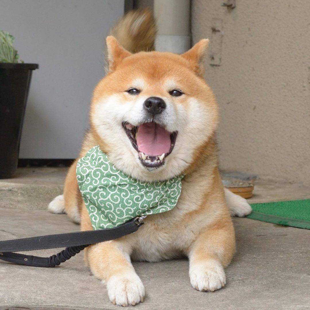 超萌「柴界表情帝」IG風靡30萬粉絲 壞壞「擠肉跩笑」網笑翻:根本韓劇歐巴!