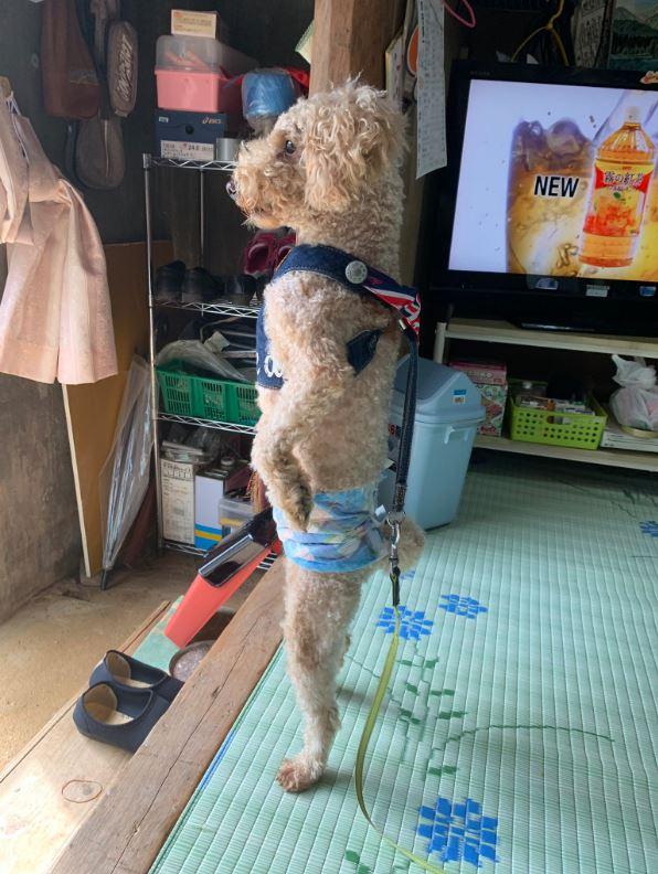 老家狗狗做出「獨特迎客姿勢」笑翻全網:工讀生給我出來!