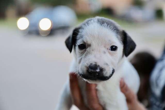 狗狗因天生長了「會微笑的鬍子」而爆紅 網看「牠全身光溜溜」畫面秒被圈粉:新一代汪美!
