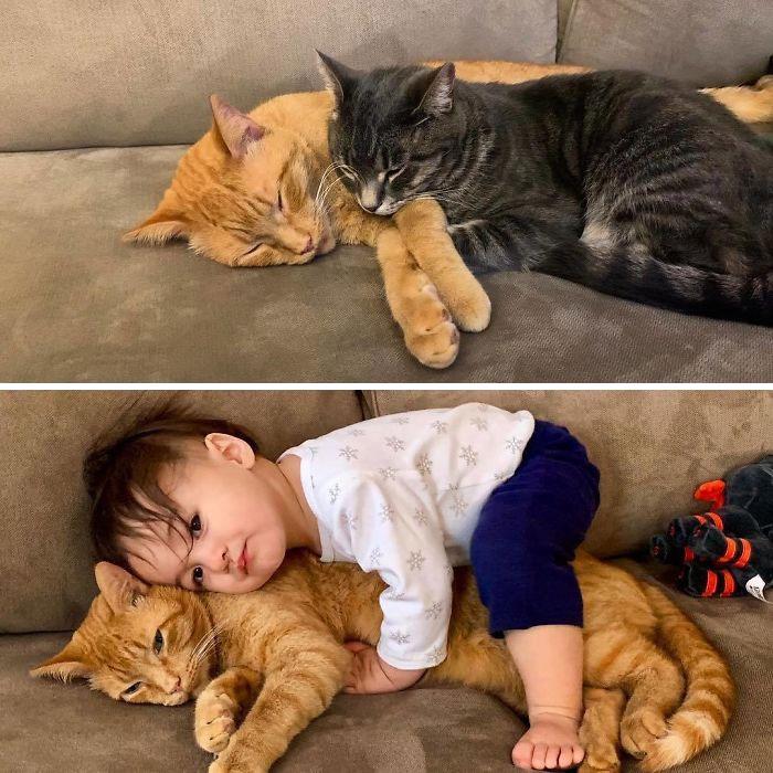 15個玩樂派爸媽「生小孩前後」的爆笑差異圖 連貓皇的生活也遭殃!