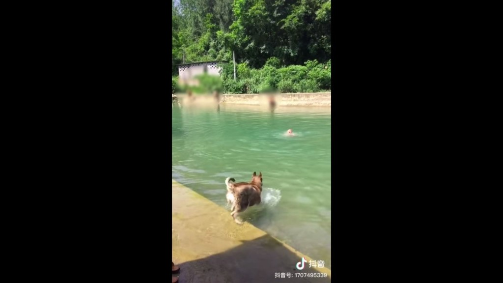 主人為了「測試狗狗忠心」假裝落水喊救命 汪星人「下水不到3秒」卻翻轉結局...網笑:白養了!