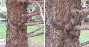 他發現松鼠呈「放射網狀排列」嚇壞 專家解釋「神秘現象」心急呼籲:請幫助牠們!