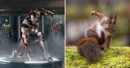松鼠「超煞氣落地姿勢」撞梗超級英雄 單膝跪「霸氣捶地」神還原《鋼鐵人》!