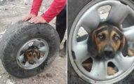 可憐狗「頭部卡在輪胎裡」大喊救命 救援人員推測「發生過程」網爆淚:原來是肚子餓QQ