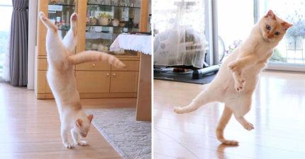 25張證明「貓皇是跳舞天才」的熱舞照 甚至連超專業「地板動作」都完美駕馭!