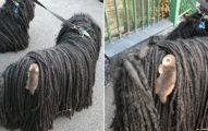 她帶愛犬出門散步…回家卻驚見「小生物」貼在身上 近看發現「水汪大眼轉頭」秒被萌翻!