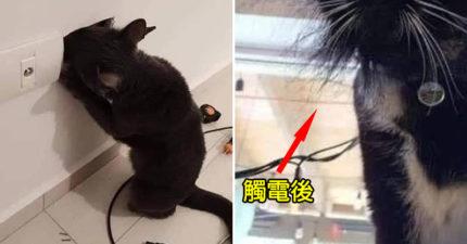 調皮貓「把頭探進電線槽」下秒卻觸電 牠瞬間「變獅子頭造型」笑翻全網!